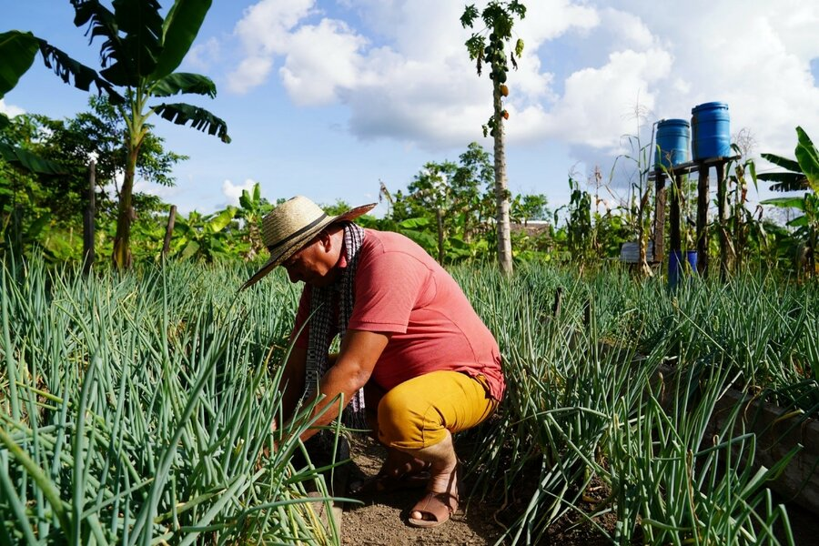 Edgar, a FARC ex-combatant , with the onion crops he is growing thanks to WFP support