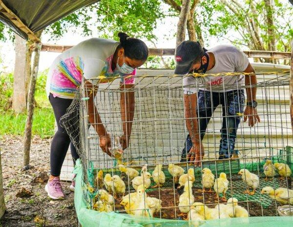 Colombia Arauca pollos 01