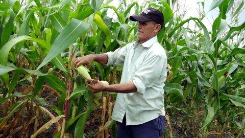 Aprenda a preparar güirilas con maíz tierno