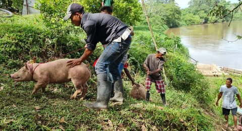 Familias afectadas por huracanes gemelos reciben bonos decerdas