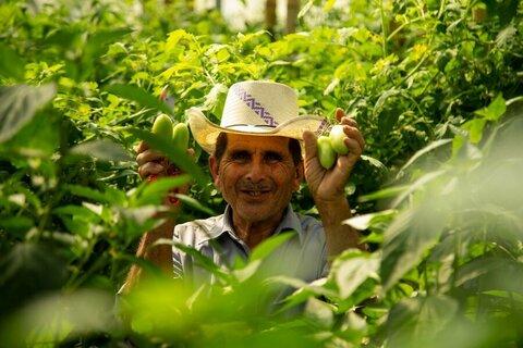 Agricultores producen oro verde en el lugar menos esperado: el Corredor Seco