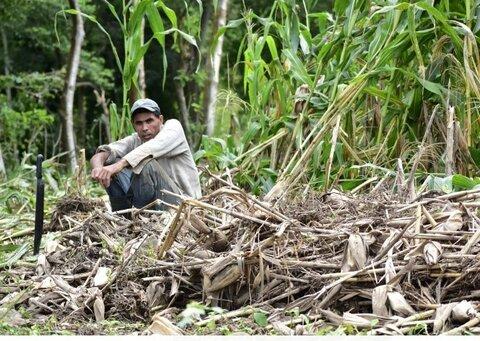El clima errático no da tregua a los productores de granos básicos de Nicaragua