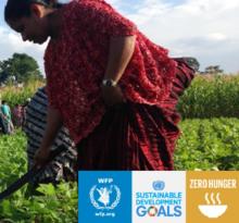 Asistencia Alimentaria por Activos (FFA) en América Latina y el Caribe
